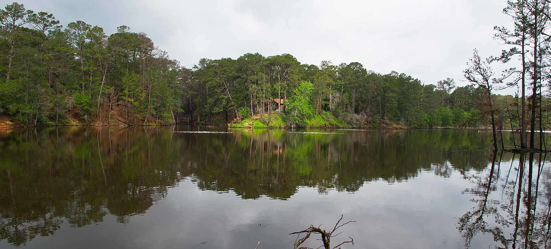 Best Camping In And Near Bastrop State Park