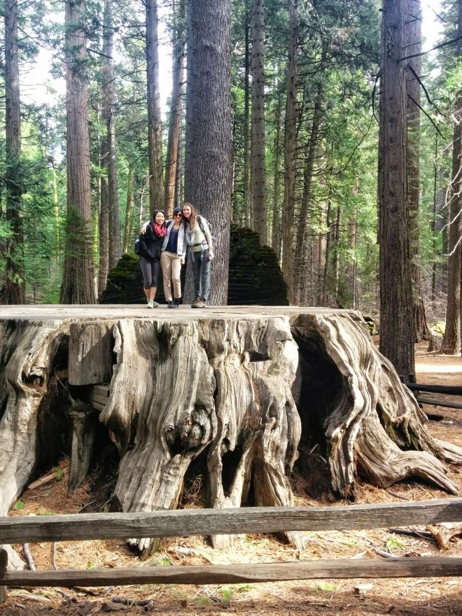 Glamping In California >> North Grove Campground, Calaveras Big Trees, CA: 1 Hipcamper review and 17 photos