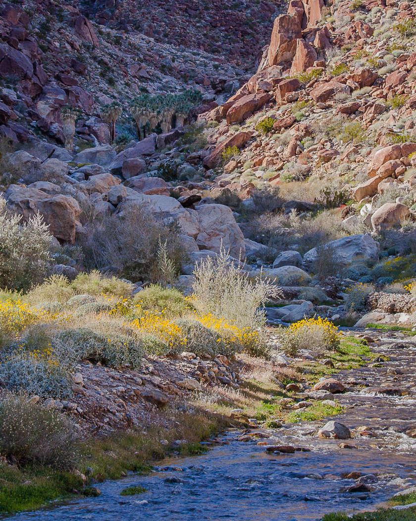 anza borrego desert state park camping