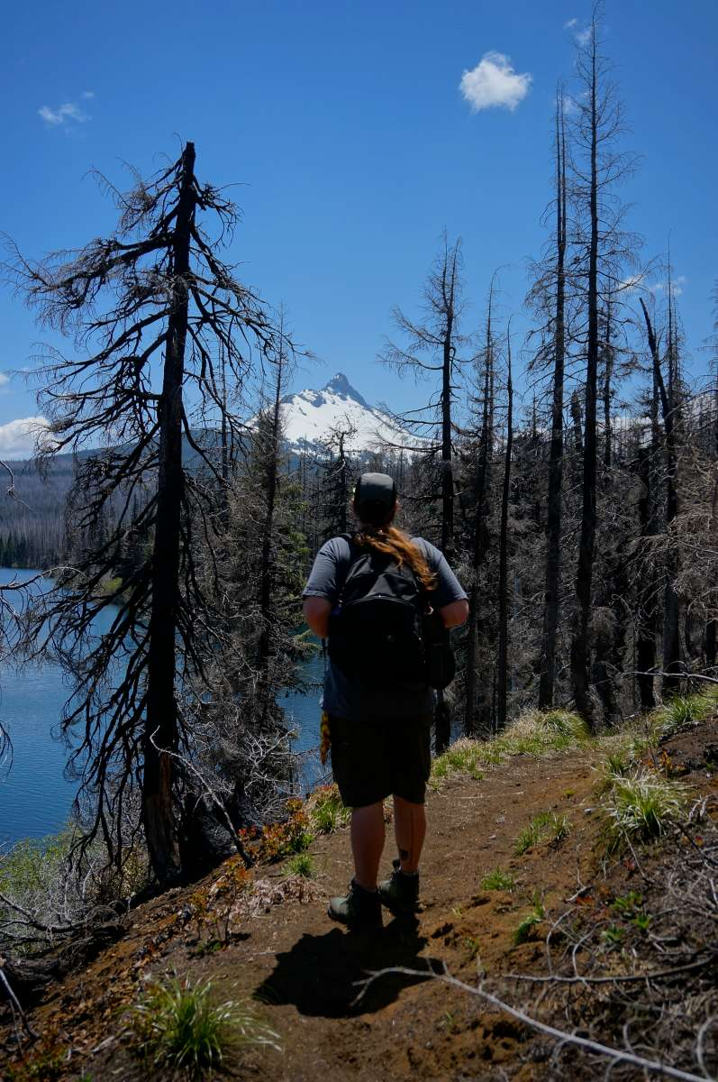 Forest Lake Auto Group >> Willamette National Forest camping