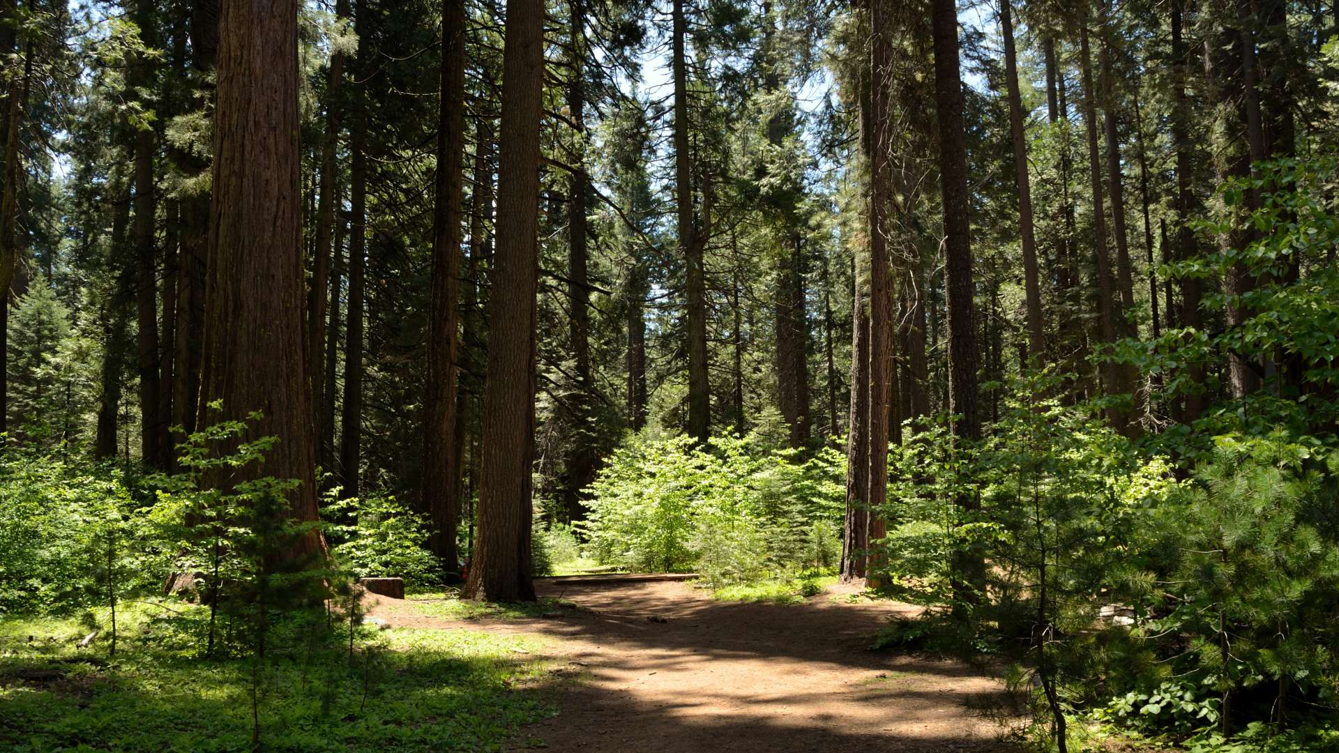 Best Camping In And Near Calaveras Big Trees State Park