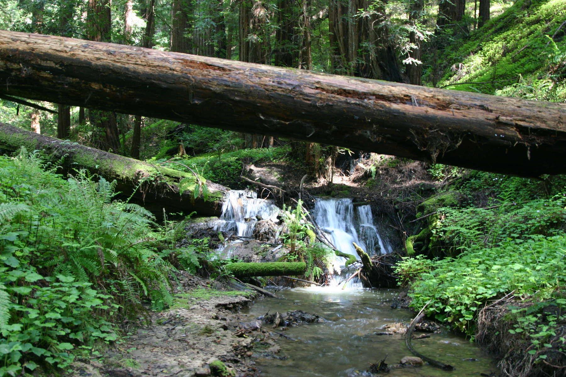 Portola Redwoods State Park Camping