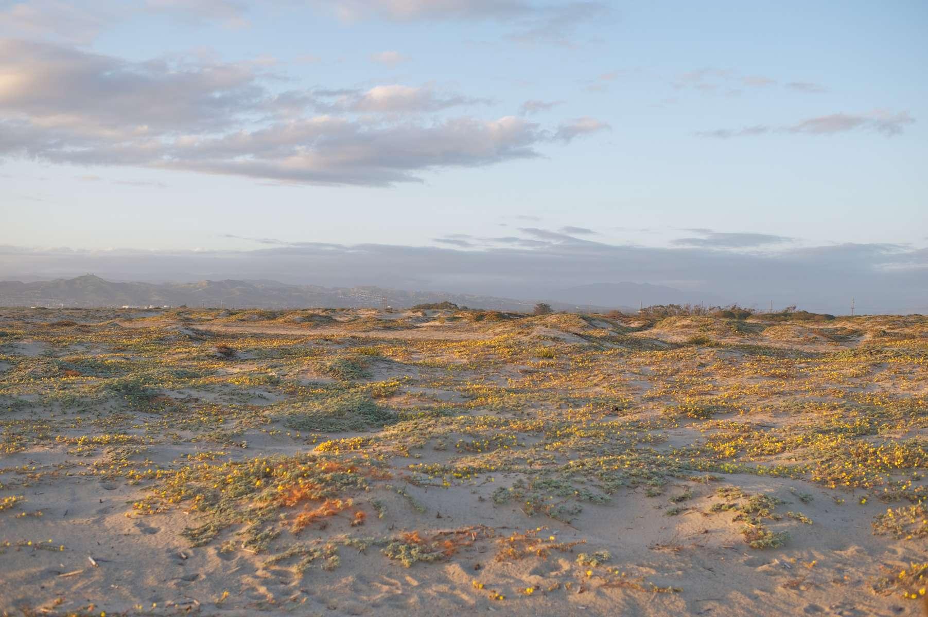 Mcgrath State Beach Reviews