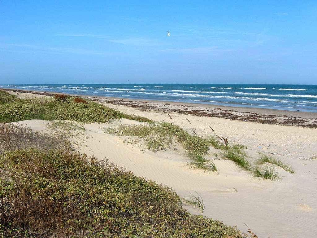 Image result for padre island national seashore