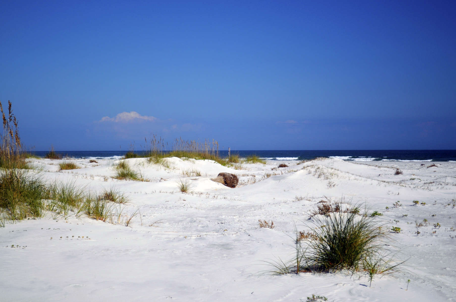 Little talbot island state park camping for Island beach state park fishing report
