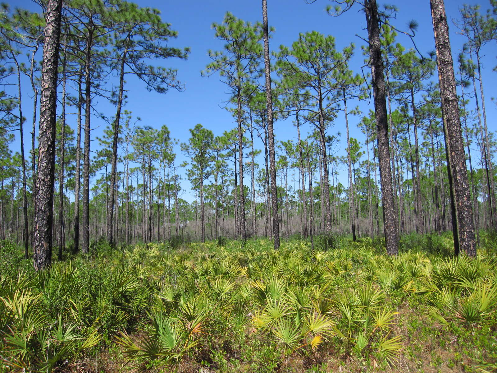 Best Camping in and Near Apalachicola National Forest