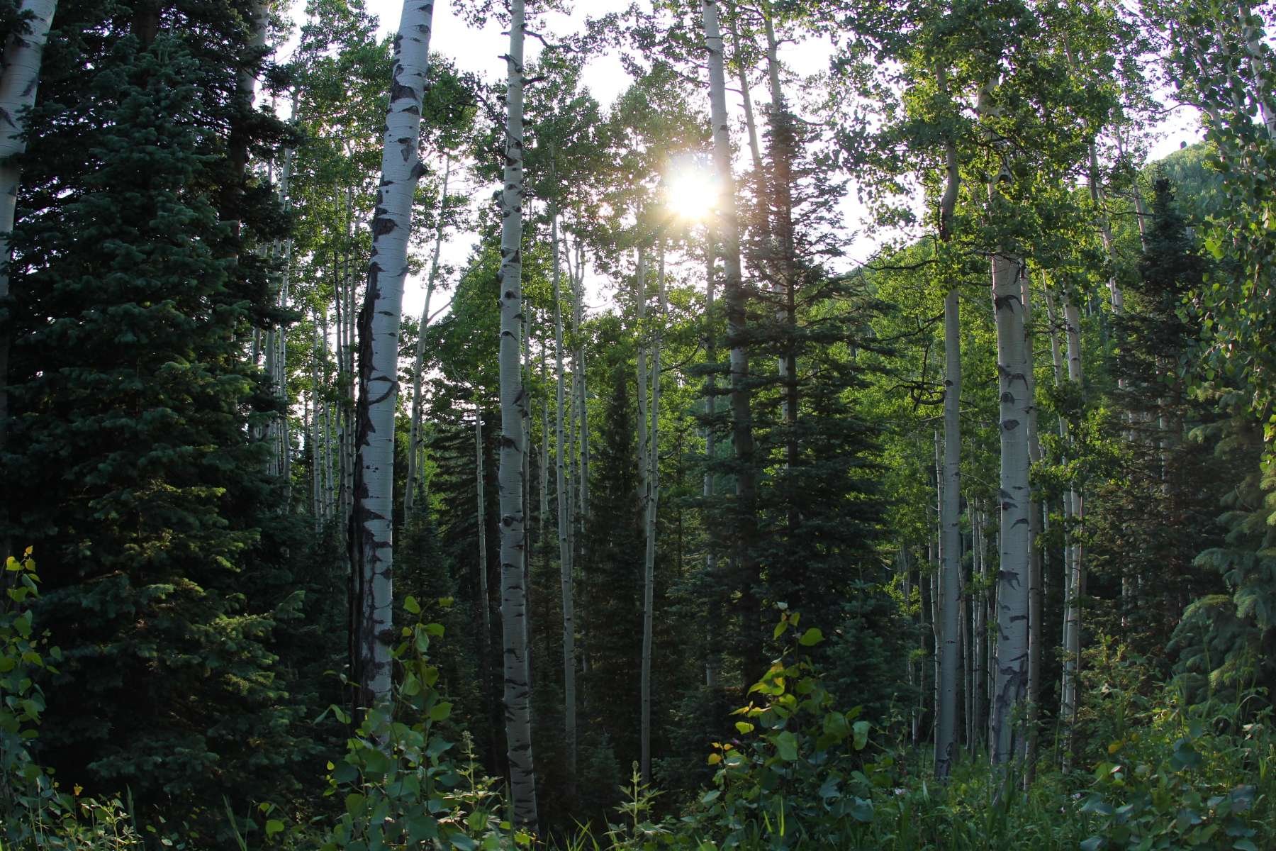 Uncompahgre National Forest Camping