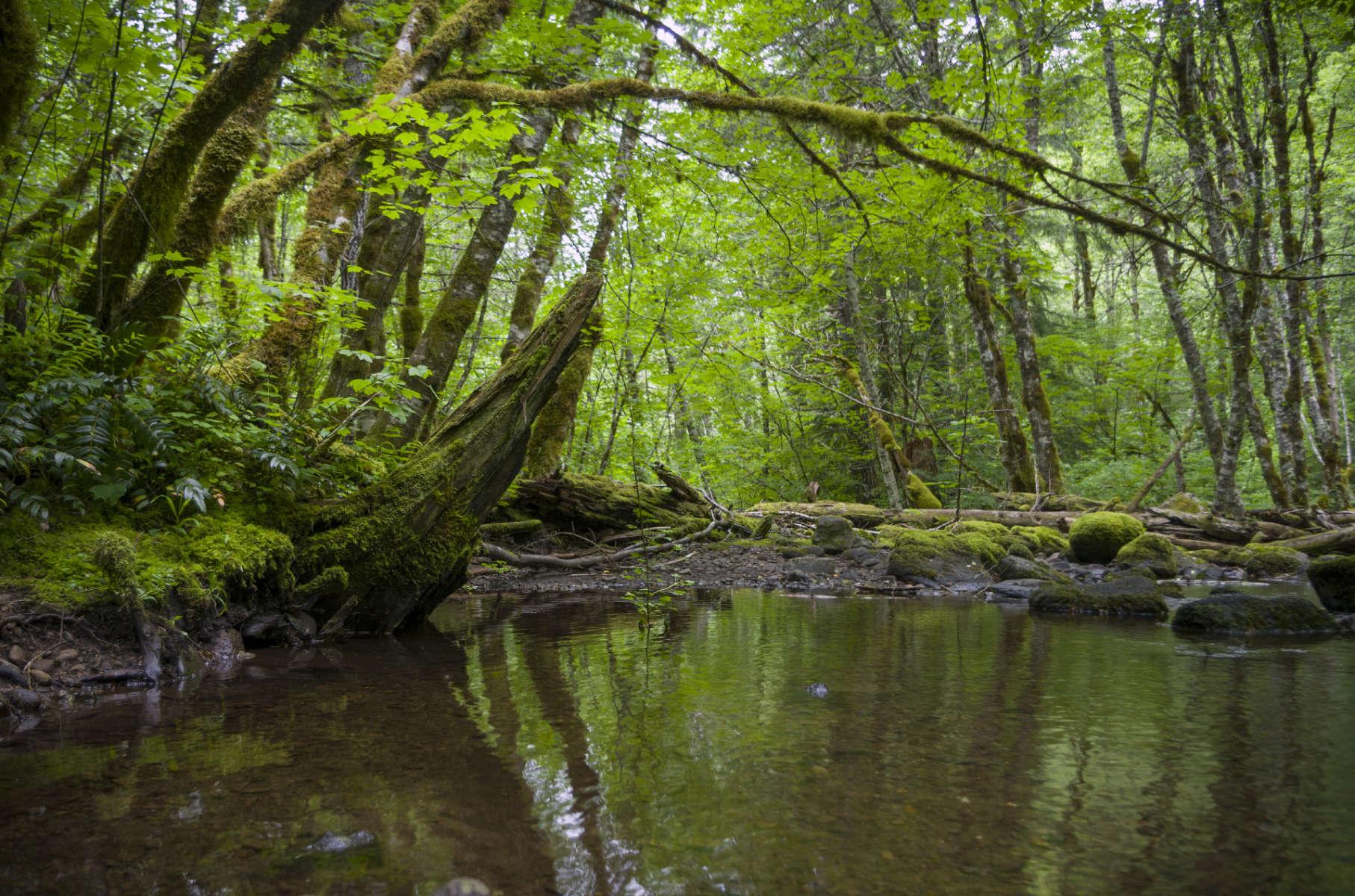 La Wis Wis Campground, Cowlitz River, Gifford Pinchot