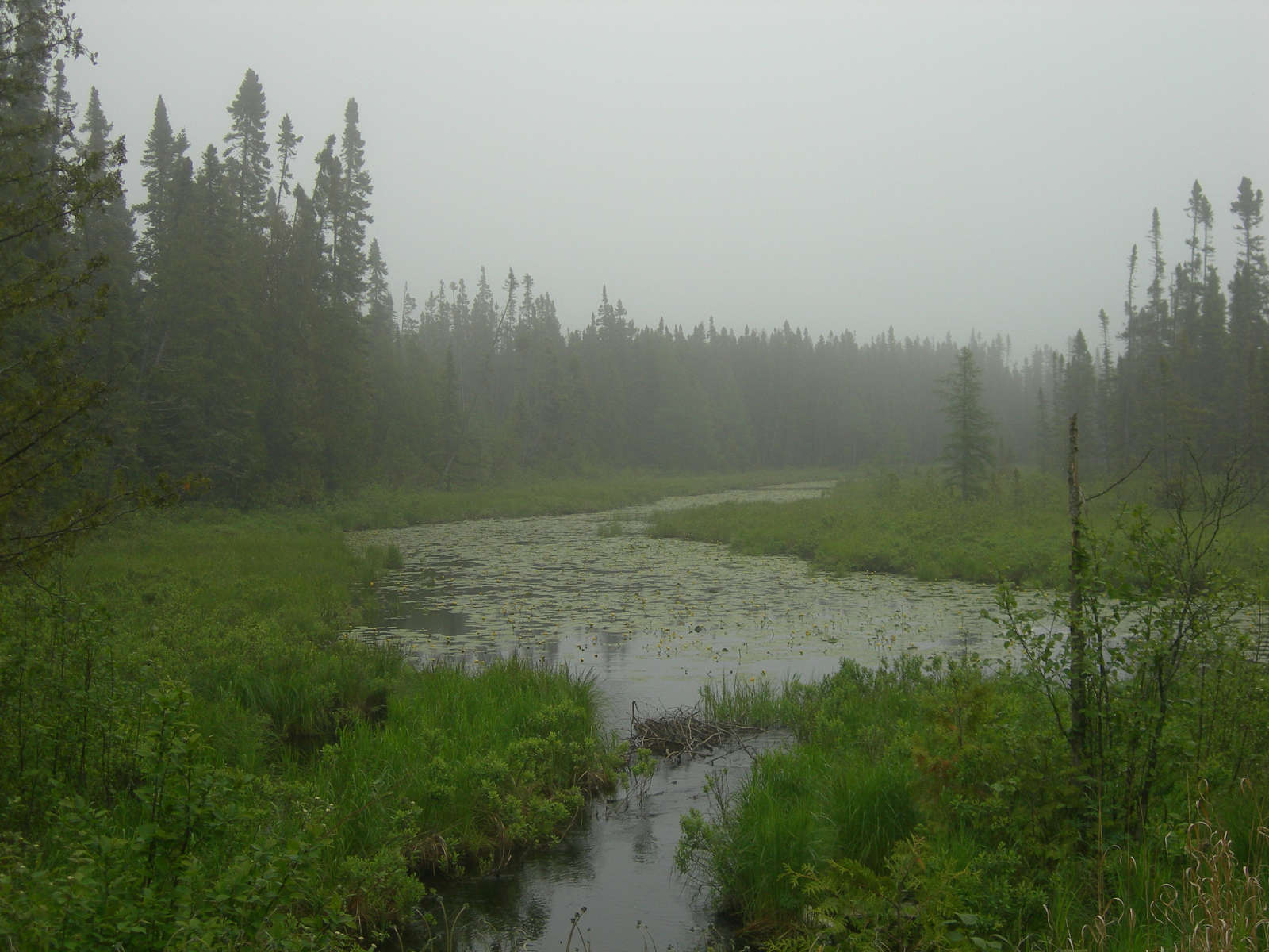 South Kawishiwi River Campground, Superior, MN:
