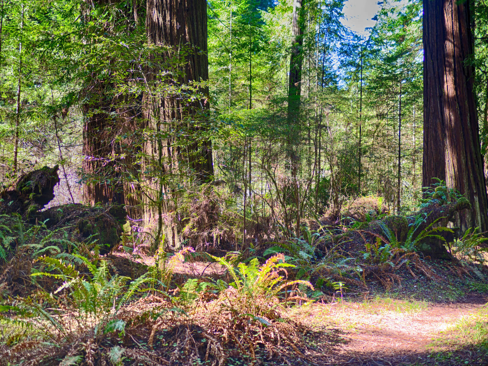 Grizzly Creek Redwoods State Park Camping