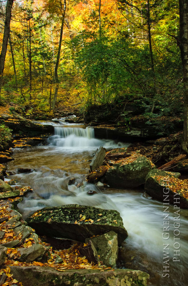Ricketts Glen State Park Camping