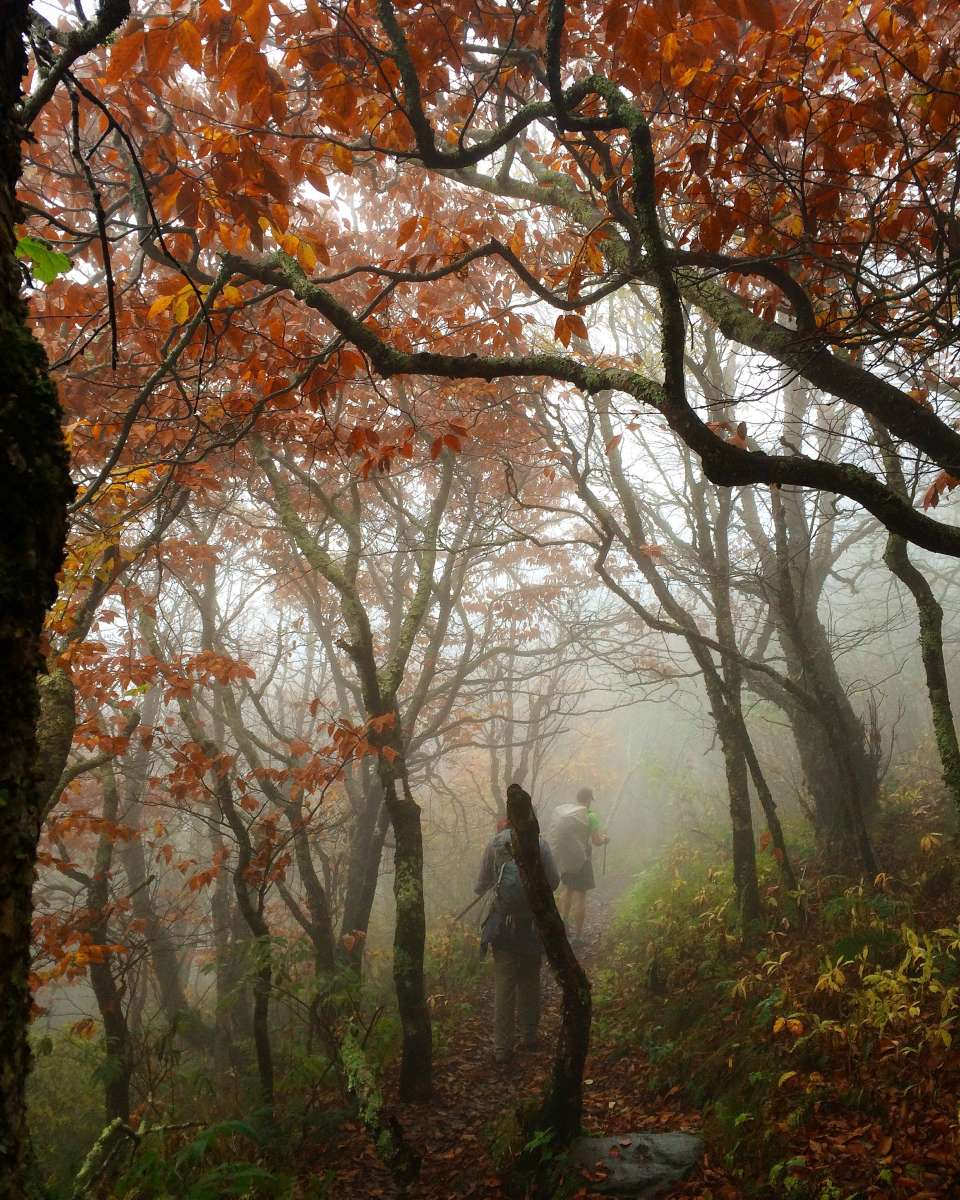 Roan Mountain State Park: Roan Mountain Campground, Roan Mountain, TN: 1 Hipcamper