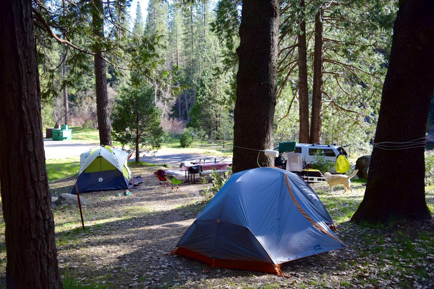 Wawona Campground Yosemite Ca 21 Hipcamper Reviews And
