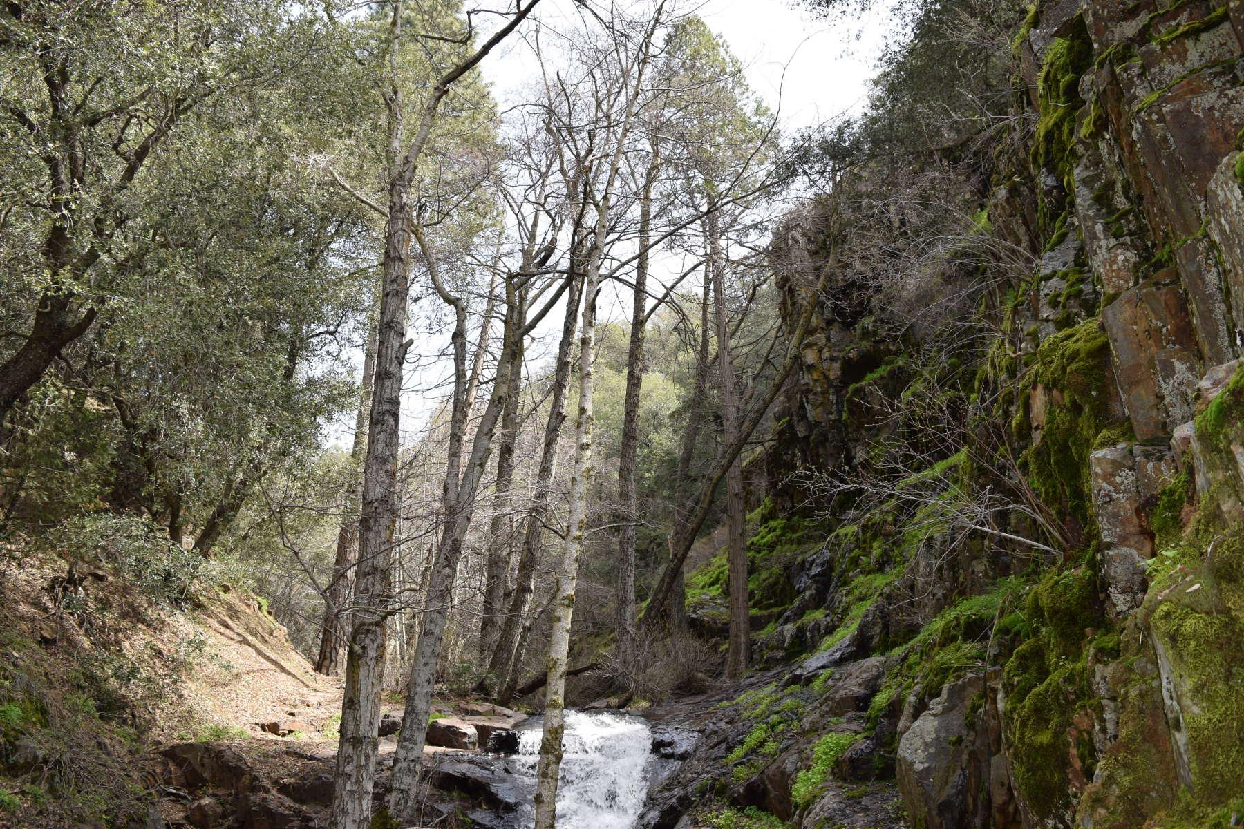Cedar creek campground sequoia forest ca 1 hipcamper for Cedar creek