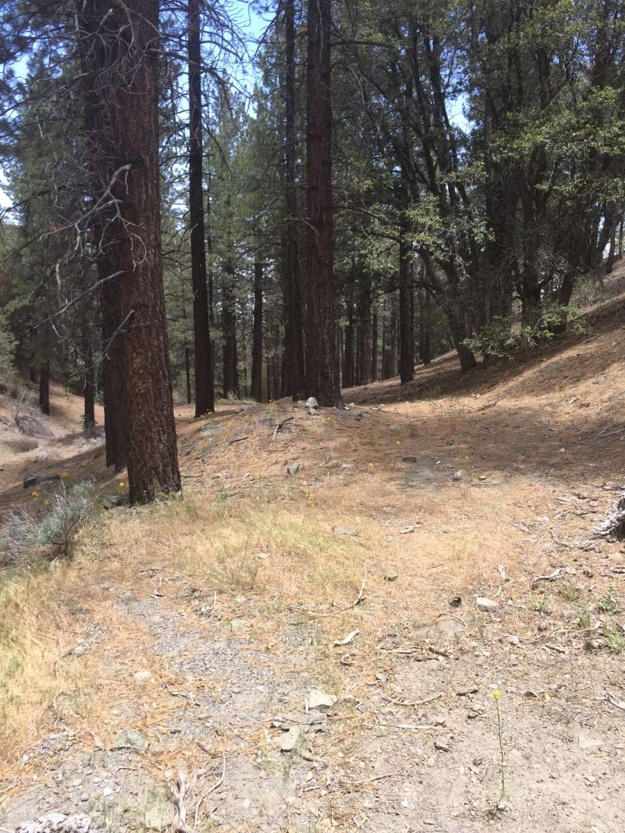 Wrightwood Elevation : Glamp in wrightwood the rhinestone forest ca photos