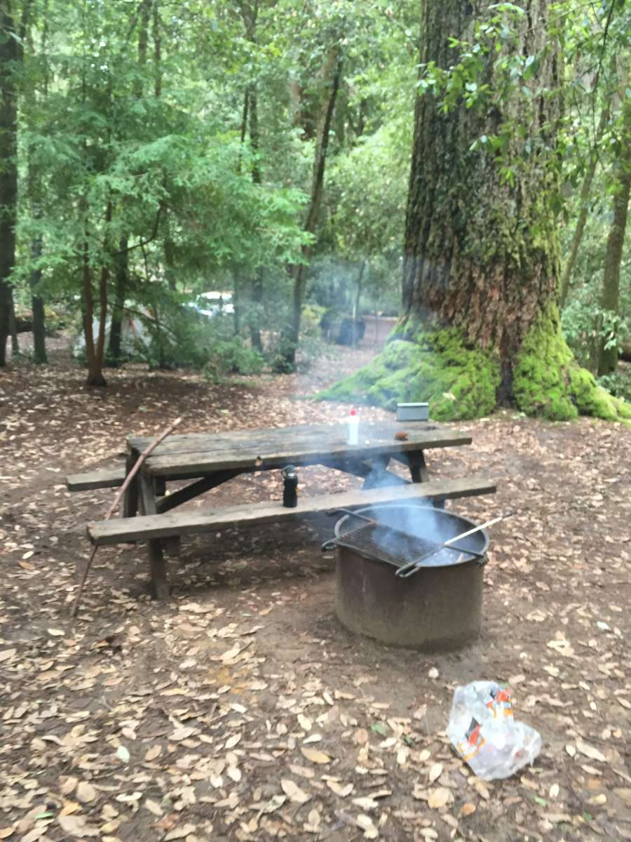 Huckleberry Campground, Big Basin Redwoods, CA: 15 Hipcamper reviews ...