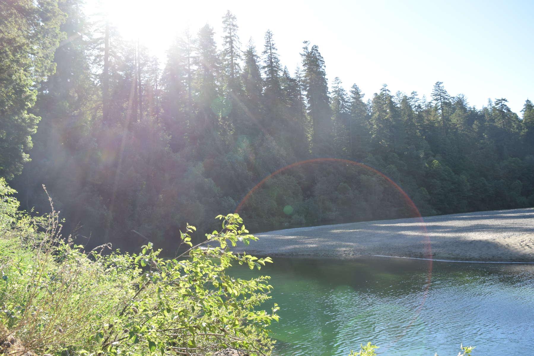 Hidden Springs Campground, Humboldt Redwoods, CA: 3 Hipcamper