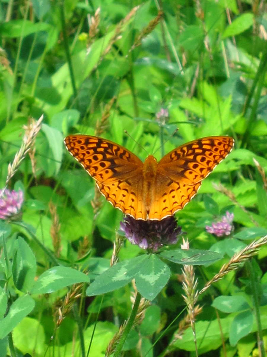 Butterfly - photo#53