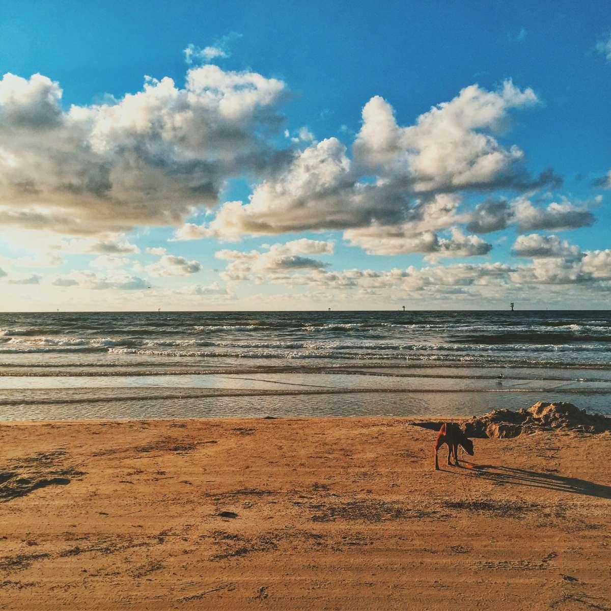 Mustang Island Beach: Mustang Island Campground, Mustang Island, TX: 8 Hipcamper