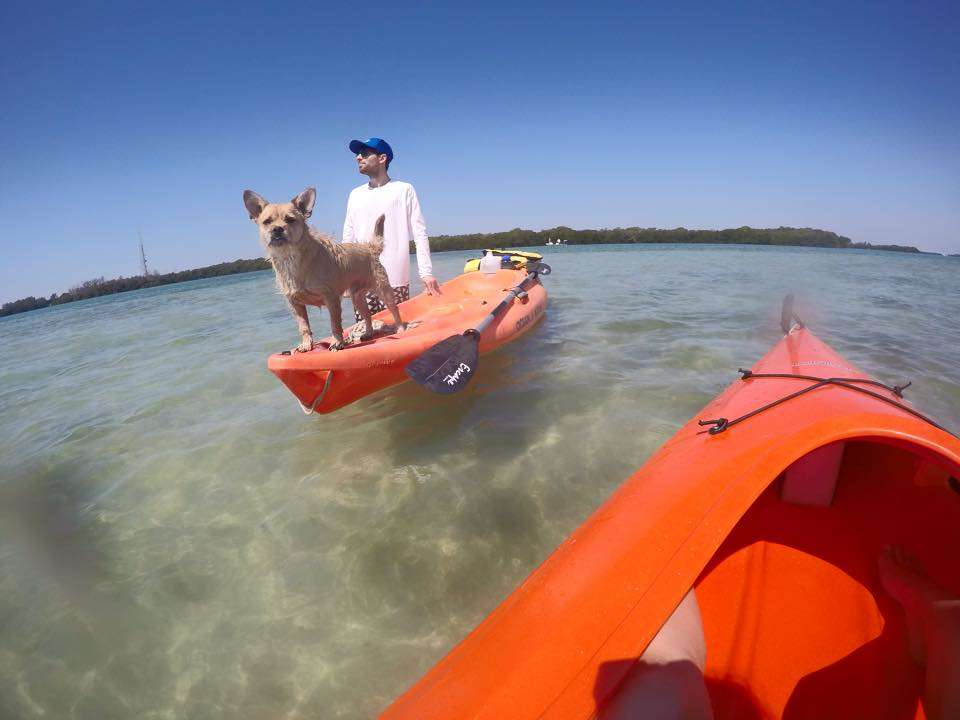 Including the four-legged kind on kayaks.
