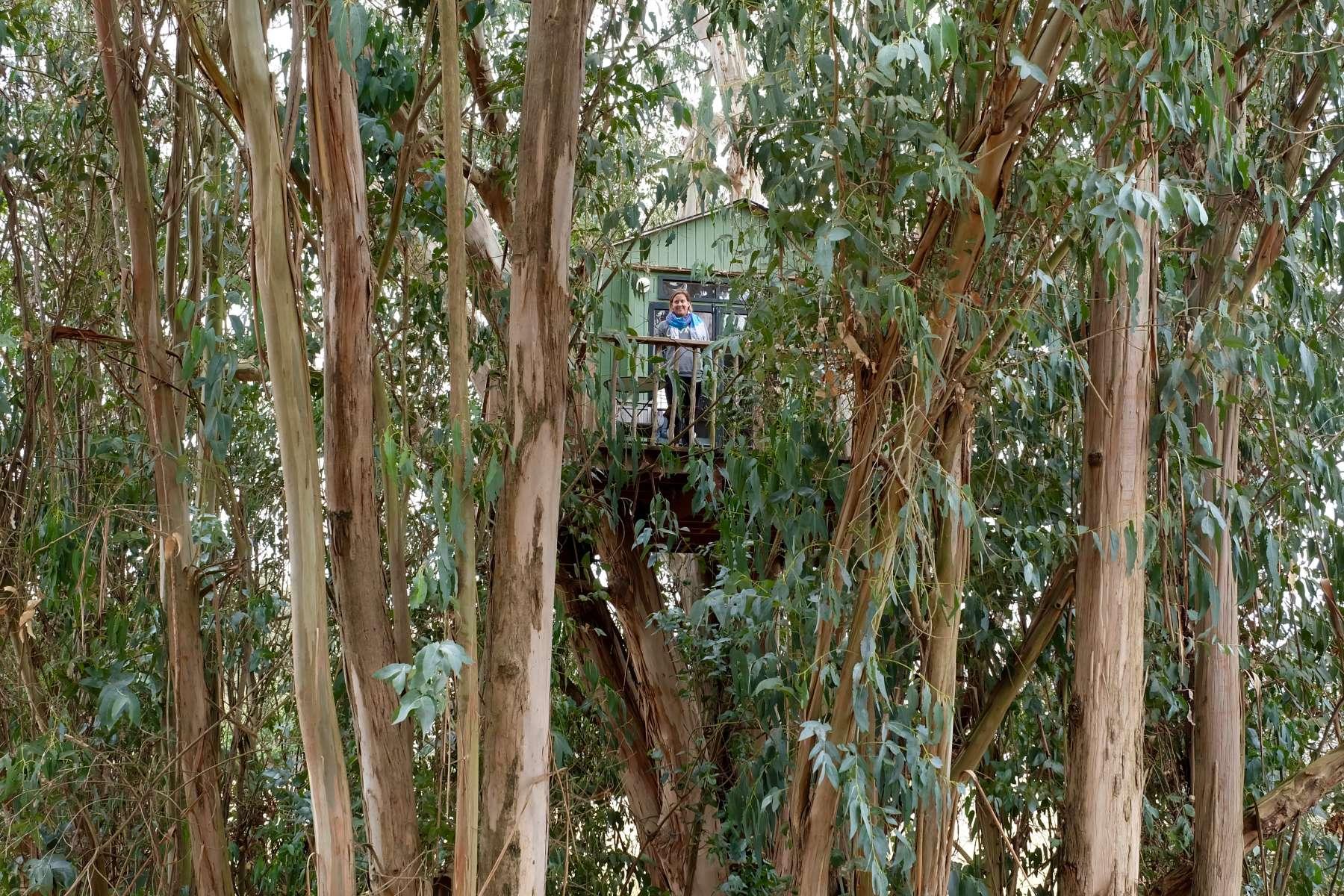 mary js photo at treehouse magic grove
