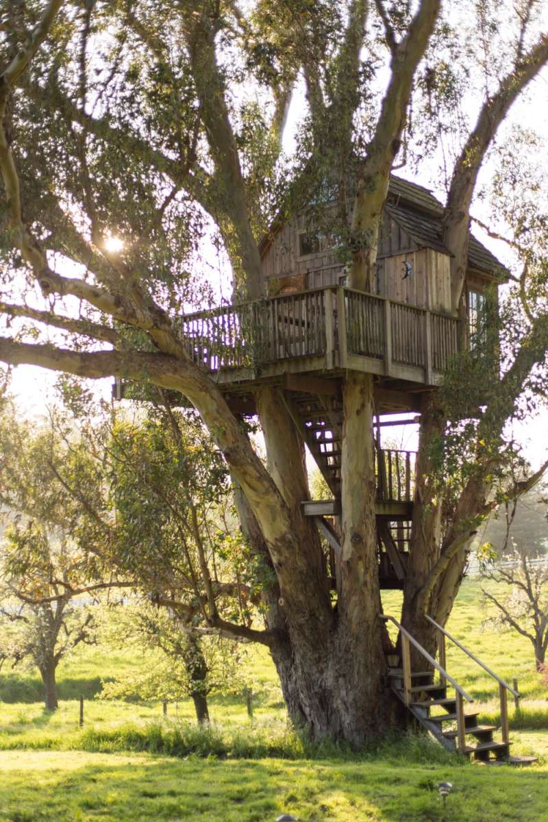 Treehouse Pictures Treehouse At Swallowtail Studio Magical Romantic Treehouse Ca