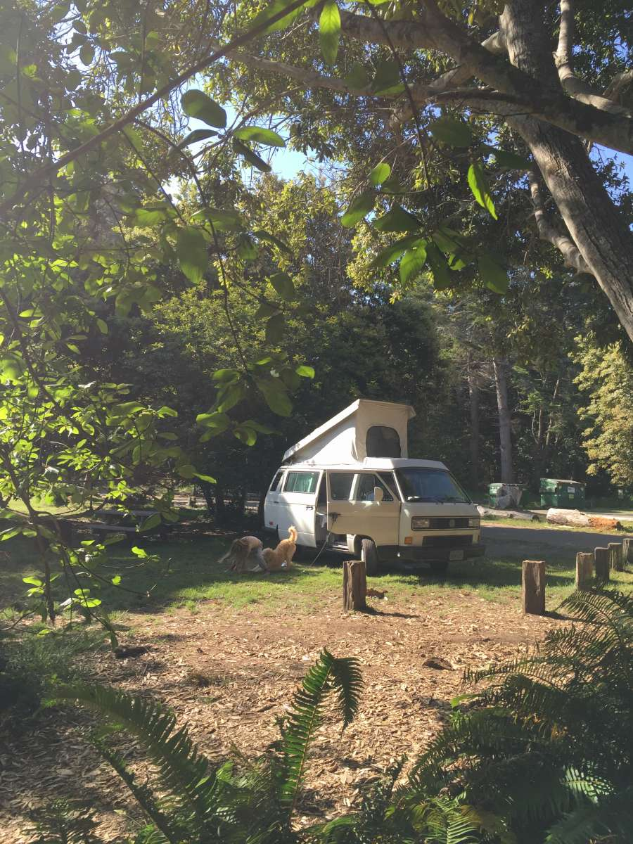 Best Camping In And Near Mackerricher State Park