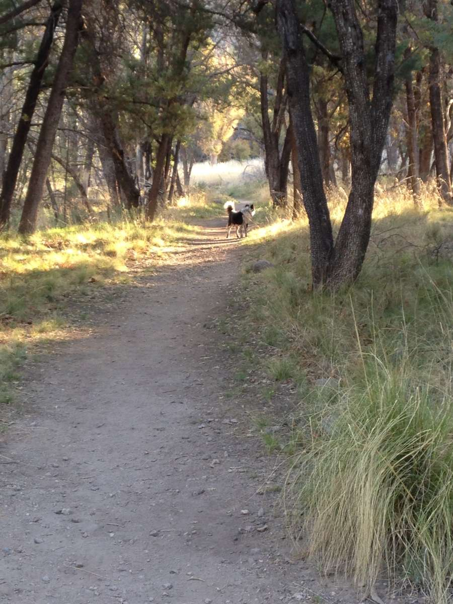 Forest Lake Auto Group >> Best Camping in and Near Chiricahua National Monument