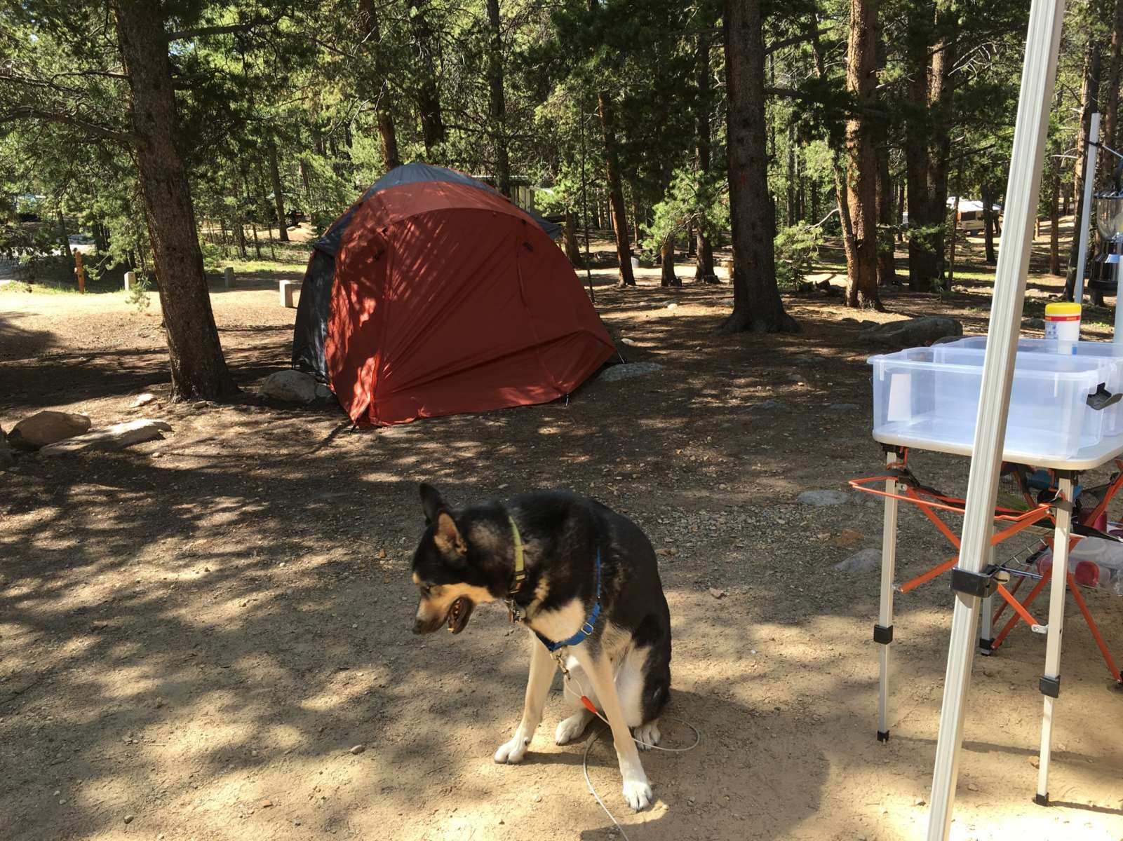 baby doe Baby doe campground is situated on the eastern shore of turquoise lake in the  shade of a lodgepole pine and subalpine fir forest the family-friendly.