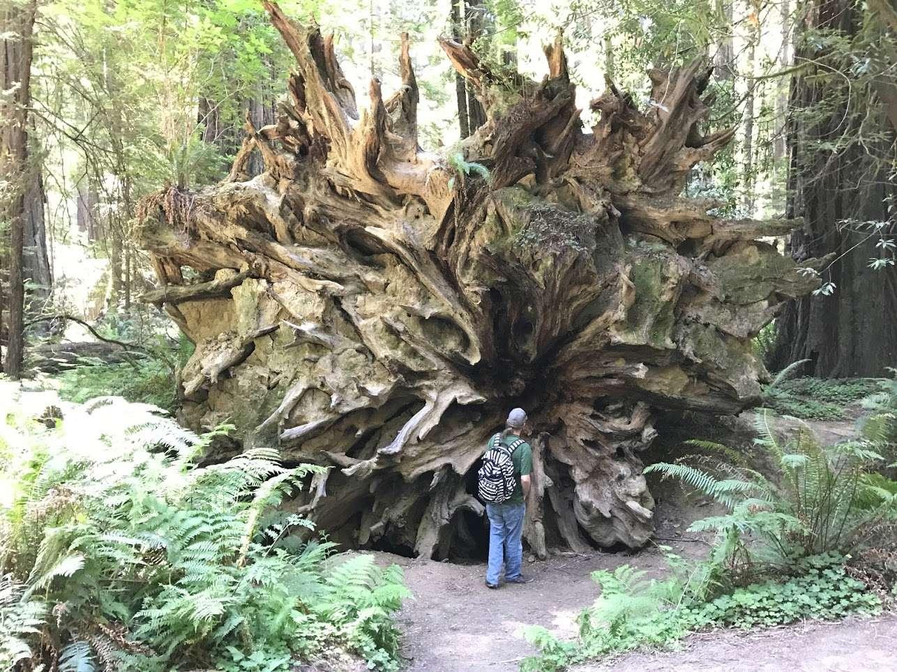 burlington campground, humboldt redwoods, ca: 6 hipcamper reviews
