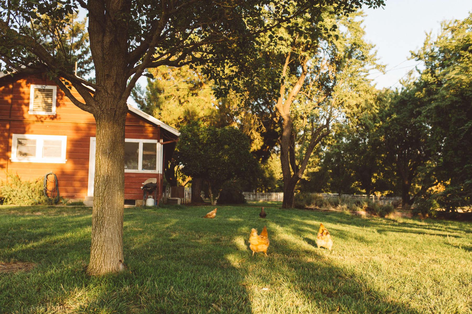 Sterling Creek Ranch, Sterling Creek Ranch, CA: 10 Hipcamper reviews ...