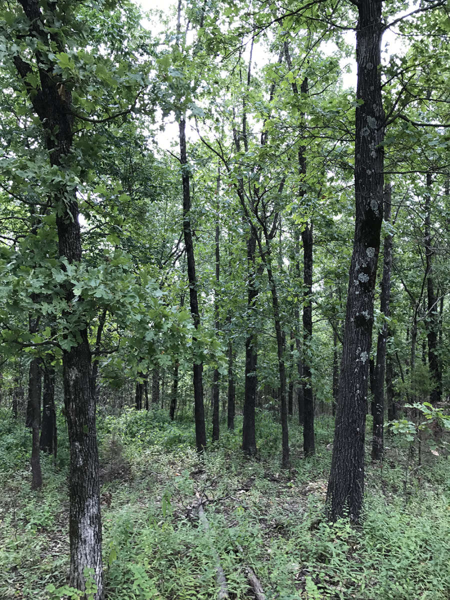Niangua Valley Forest Camping