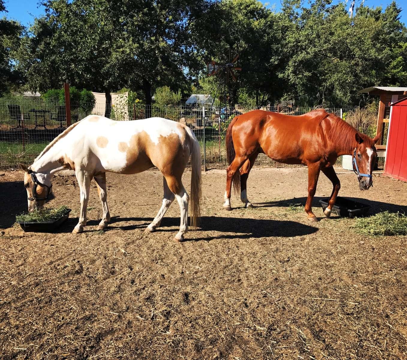 Chef\'s Farm & Garden, Chef\'s Garden, CA: 1 Hipcamper review and 17 ...