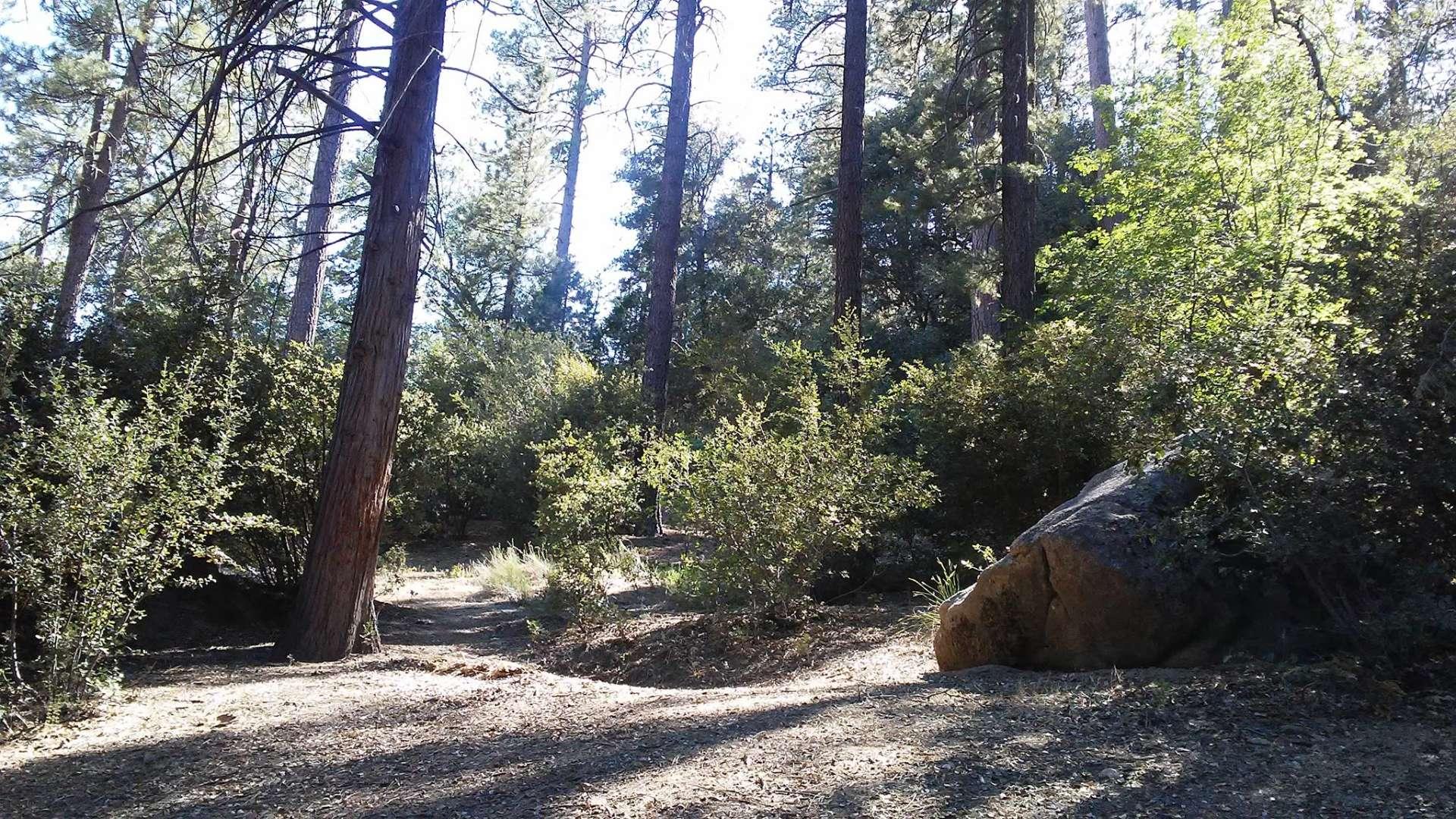 idyllwild campground, mount san jacinto, ca: 8 hipcamper reviews and