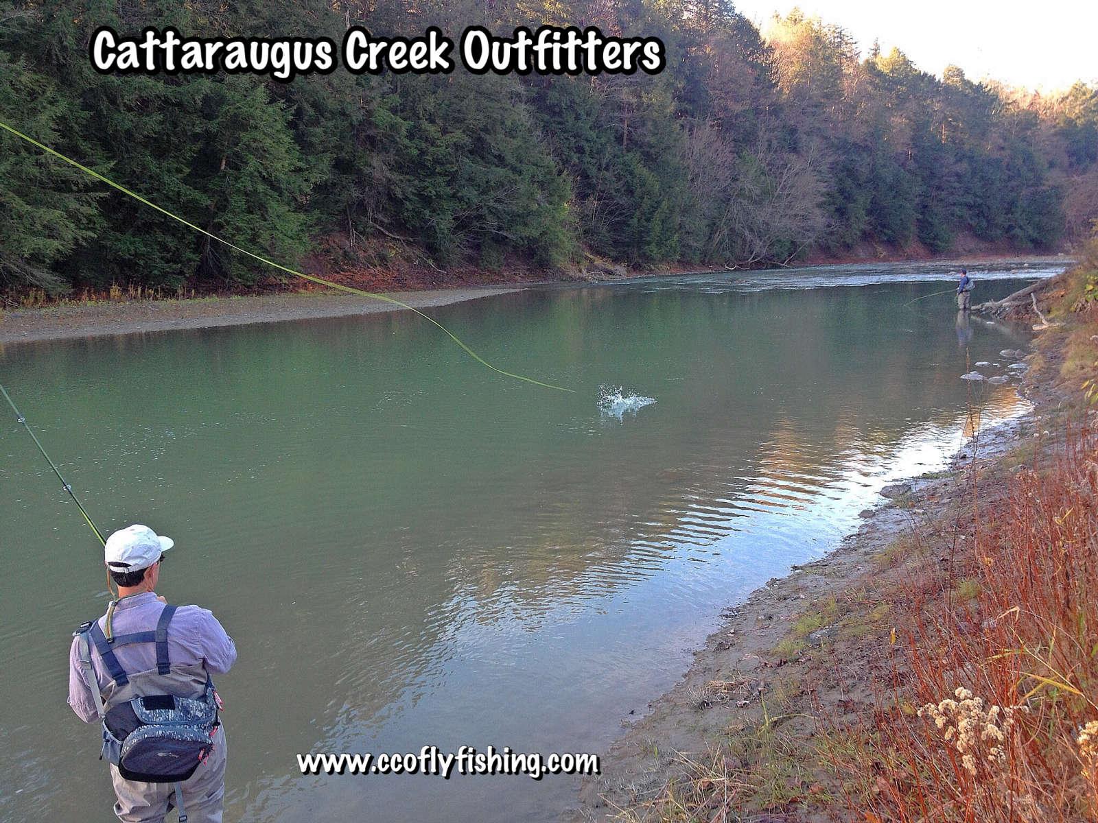 Zoar valley cattaraugus creek camping for Cattaraugus creek fishing report