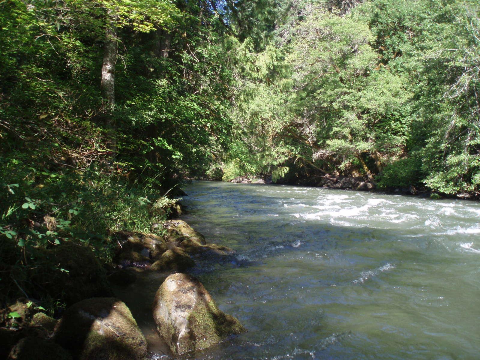 White Salmon River Forest River S Edge Wa 3 Photos