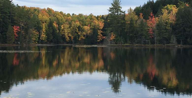 Best Camping in and Near Craig Lake State Park