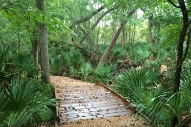 Palmetto Interpretive Trail