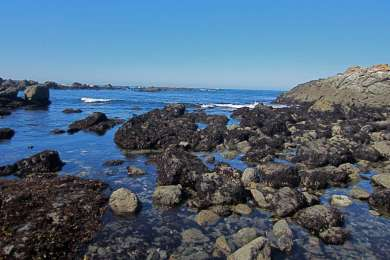 Tidepools! Very close to campground