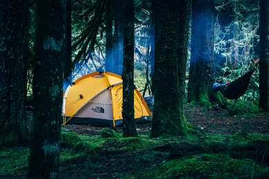 tent forest hammock