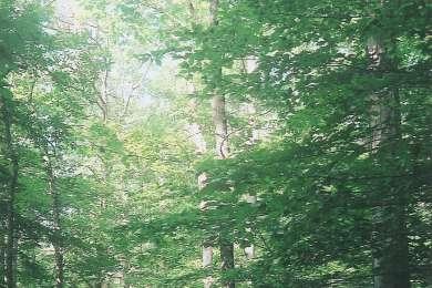 Killens Pond State Park