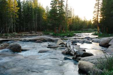 The A loop of campgrounds are right next to the Tuolumne River.