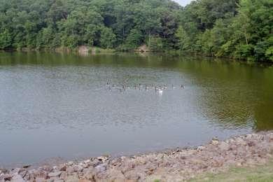 Lake Murphysboro Campground
