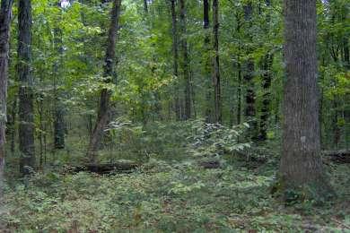 Cedars of Lebanon State Park
