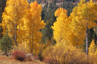 So cool in the fall!! The trees were beautiful colors.