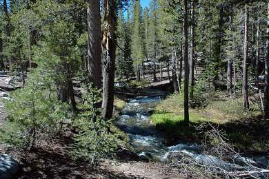 Awesome little creek to play in!