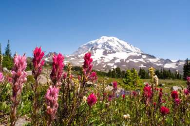 If you're camping at Mowich Lake, take the 6+ mile trail up to Spray Park! Stop ar the waterfall to see the fantastic, multi-tiered falls and then continue on for stunning views of Mount Rainier (and some wildflowers if the season is right)!