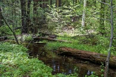Nelder Creek