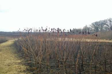Prairie trail after March 2014 prairie burn