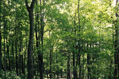 Beautiful trails